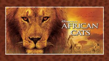 Netflix box art for African Cats