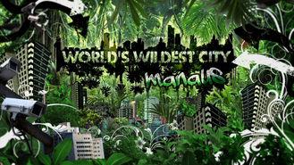 Netflix box art for World's Wildest City - Season 1