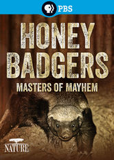 Nature: Honey Badgers