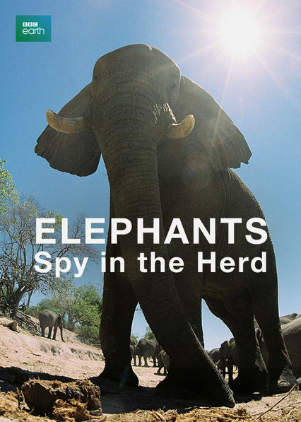 Elephants: Spy in the Herd Netflix AR (Argentina)