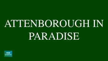 Netflix box art for Attenborough in Paradise - Season 1