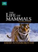 The Life of Mammals | filmes-netflix.blogspot.com.br