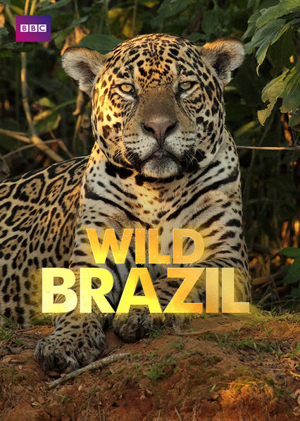 Wild Brazil Netflix KR (South Korea)