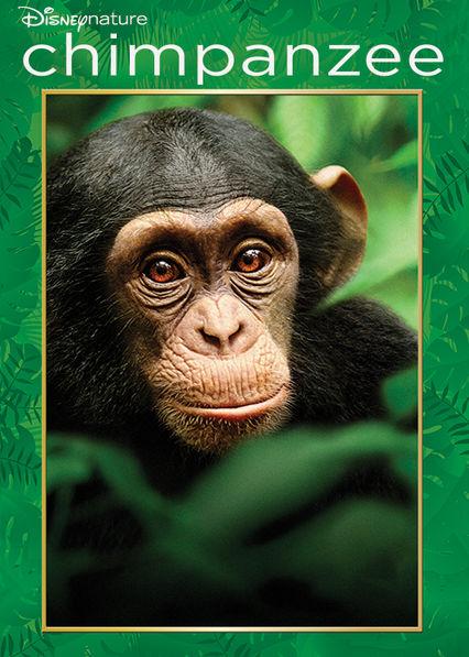 Chimpanzee Netflix AW (Aruba)