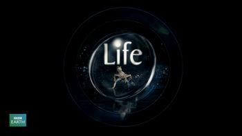 Netflix box art for Life - Season 1