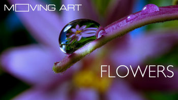 Netflix box art for Moving Art: Flowers