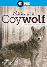 Nature: Meet the Coy-wolf