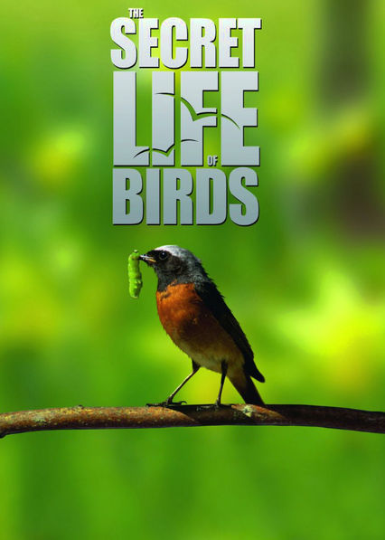 The Secret Life of Birds Netflix UK (United Kingdom)