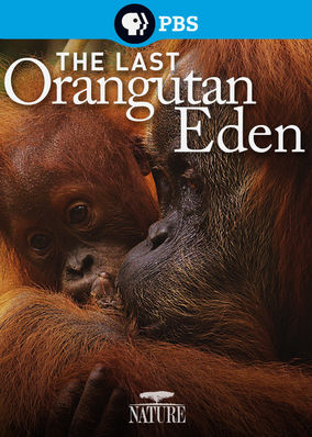 Nature: The Last Orangutan Eden