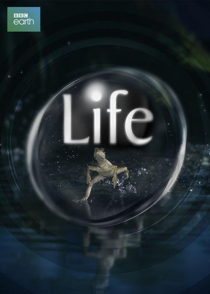 Life Netflix AR (Argentina)