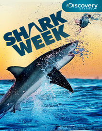Shark Week: 2011: Summer of the Shark