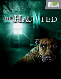 The Haunted: Season 2: Invasion of the Poltergeist