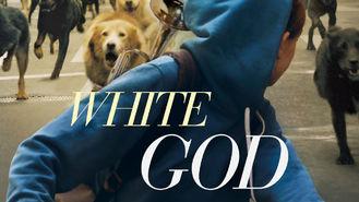 Netflix Box Art for White God